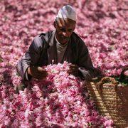 Rose Festival in Morocco